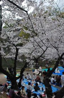 花見客でにぎわう熊本城周辺=熊本市中央区で2016年4月2日、中里顕撮影