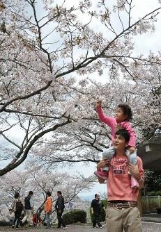 満開となった発心公園の桜=福岡県久留米市草野町で2016年4月2日、中村清雅撮影