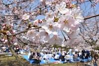 多くの花見客でにぎわう玉藻公園=高松市玉藻町で2016年4月2日、待鳥航志撮影