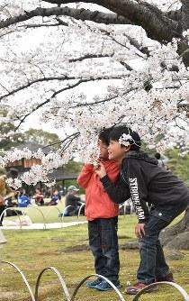 岡山後楽園で桜を楽しむ人たち=岡山市北区で2016年4月2日、林田奈々撮影