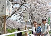 咲き誇る桜とあんどんに見入る花見客たち=奈良市で2016年4月2日、芝村侑美撮影