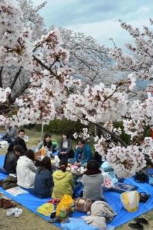 桜の下で花見を楽しむ観光客=山梨県富士川町鰍沢の大法師公園で2016年4月3日、滝川大貴撮影