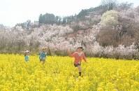菜の花や桜が咲き乱れる中、楽しそうに走り回る子どもたち=福島市の花見山で2016年4月3日、宮崎稔樹撮影