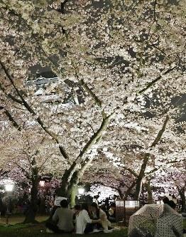 夜桜を楽しむ花見客たち=大阪市中央区の大阪城西の丸庭園で2016年4月3日、幾島健太郎撮影
