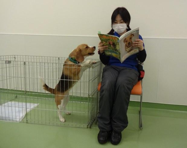どうぶつ 犬の留守番 信頼関係が鍵 毎日新聞