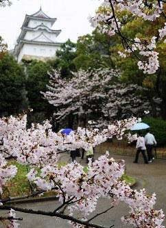 見ごろを迎えた明石公園の桜=兵庫県明石市で2016年4月4日、駒崎秀樹撮影