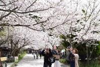 満開の桜のアーチの下で写真を撮る女性たち=兵庫県洲本市山手3で2016年4月5日、登口修撮影