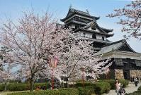 桜が満開を迎えた松江城=松江市の松江城山公園で2016年3月31日、藤田愛夏撮影