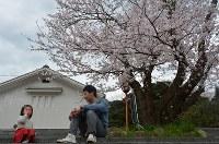 桜の木の下でシャボン玉を飛ばす親子=島根県安来市広瀬町の飯梨川河川敷で2016年4月3日、藤田愛夏撮影