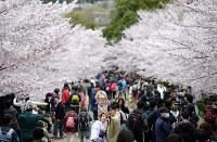 多くの観光客らでにぎわう蹴上インクライン=京都市左京区で2016年4月4日、小松雄介撮影