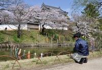 桜が満開な東櫓前の内濠にこいのぼりを掲出する作業を行う土浦市職員=茨城県土浦市中央1の亀城公園で2016年4月6日、庭木茂視撮影