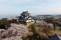 ひこドローンが撮影した満開の桜に包まれた国宝・彦根城天守=滋賀県彦根市シティプロモーション推進室提供
