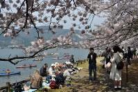 満開となった海津大崎の桜並木を訪れた花見客。湖上にカヌーを繰り出す人たちも=滋賀県高島市マキノ町で2016年4月9日、塚原和俊撮影
