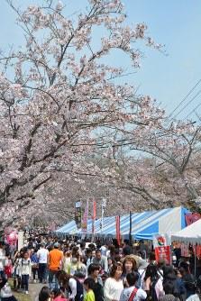 多くの家族連れでにぎわった「名張桜まつり」=三重県名張市夏見で2016年4月9日、竹内之浩撮影