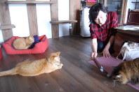 保護猫と自由に触れ合える猫スペース