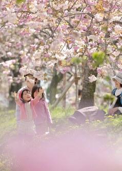 陽気の中、満開になった桜を楽しむ親子連れ=広島市佐伯区で2016年4月14日
