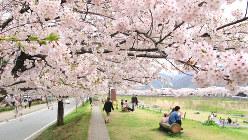 桜の下を散策する人たち=山形市で