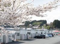 東日本大震災から5年あまり。仮設住宅周辺の桜を複雑な思いで見つめる人たちもいる=宮城県気仙沼市上田中2の反松公園仮設住宅で2016年4月14日、三浦研吾撮影