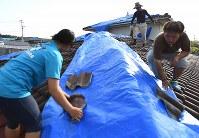 明日からの雨に備え、壊れた屋根の上にビニールシートを敷く佐藤友春さん(38)一家。先週降った雨の前にもシートを敷いたが風で飛ばされ家の中が雨漏りした。「何度も敷くのも大変。風が吹かないことを祈っています」=熊本県西原村で2016年4月20日午後4時43分、久保玲撮影