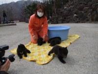 Baby bears born in January are seen in the city of Takayama, Gifu Prefecture. (Photo courtesy of the Okuhida Bear Park)