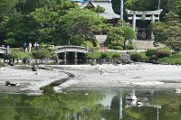 池の水が枯れ底があらわになった水前寺成趣園の池=熊本市中央区で2016年4月26日、須賀川理撮影