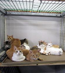 長野市信州新町で保護された捨て猫=同市保健所提供