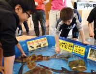 恐る恐るサメに触れる子供たち=鳥取市の県立とっとり賀露かにっこ館で、園部仁史撮影