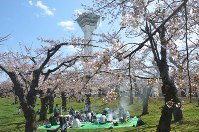五稜郭公園で開花した桜。バーベキューする花見客も=函館市で2016年4月24日、遠藤修平撮影