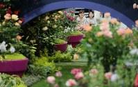 Visitors enjoy roses at the International Roses & Gardening Show at Seibu Prince Dome in Tokorozawa, Saitama Prefecture, on May 12, 2016. (Mainichi)