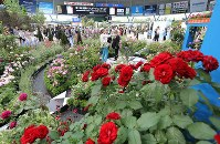 Various types of roses and flowers are seen at the International Roses & Gardening Show at Seibu Prince Dome in Tokorozawa, Saitama Prefecture, on May 12, 2016. (Mainichi)