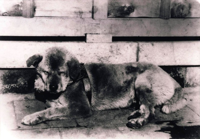 Exhibition debuts photograph of famous dog Hachiko's harness - The