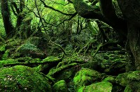 世界自然遺産・屋久島(1993年登録)
