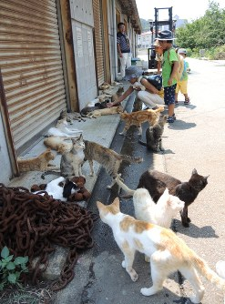 観光客の人気になっている男木島の猫=高松市の男木島で2015年8月1日午後1時1分、玉木達也撮影
