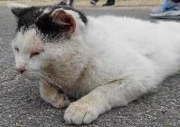 男木島では健康状態の良くない猫も散見される=NPO法人BONにゃん提供