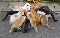 男木島に住む猫たち=NPO法人BONにゃん提供