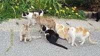 男木島でくつろいだ様子の猫たち=NPO法人BONにゃん提供