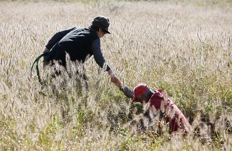 死んだ牛を穴に安置し、妻シヅ子さん(、左)の手を借り、はい上がる山本幸男さん。朝、牧場に到着したときには、牛は農道脇で死亡していた。重機で2㍍程の穴を掘り、土をかぶせる前に顔を袋で覆ってあげた=福島県浪江町で2015年11月、小出洋平撮影