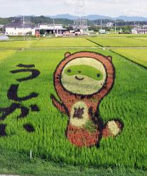 「ぽんぽこちゃん」を表現した2015年の田んぼアート=滋賀県甲賀市水口町牛飼で、村瀬優子撮影