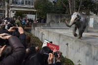 Numerous people attended an event for Hanako the elephant's 65th birthday event at the Inokashira Park Zoo in Musashino, Tokyo, on Feb. 5, 2012. (Mainichi)