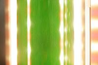 水槽内の小さな気泡。光合成で二酸化炭素を吸収するため、温暖化防止にもなる環境に優しい次世代エネルギーとしても期待が集まる=大阪市住吉区の大阪市立大で2016年6月8日、貝塚太一撮影