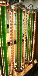 Algae in 1.2-meter tubes is grown by the light of red and orange LEDs, at the Advanced Research Institute for Natural Science and Technology at Osaka City University in Sumiyoshi Ward, Osaka, on June 8, 2016. (Mainichi)