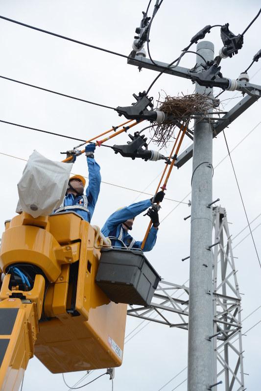 停電 東北 電力