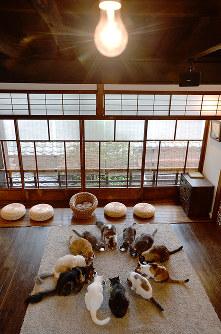 猫たちが円になって食べる「おやつタイム」=京都市上京区で、小松雄介撮影