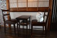 「私の席よ」=京都市上京区で、小松雄介撮影