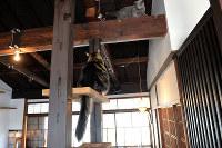 梁を生かした作りの2階を猫たちが自在に動き回る=京都市上京区で、小松雄介撮影