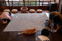 床でくつろぐ猫たちに合わせ、自然と低い撮影姿勢になる=京都市上京区で、小松雄介撮影