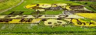 「かかし」や「安城」などを表した10周年記念の田んぼアート=愛知県安城市で2016年6月15日午後2時49分、安間教雄撮影