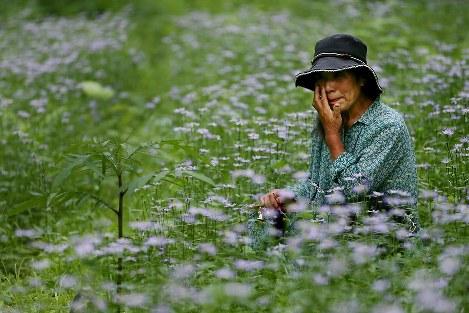 帰還困難区域の自宅に一時帰宅し、近くの三ツ森山で手塩にかけて25年以上育ててきたミヤコワスレの群生地で涙を流す遠藤富美さん。一握りの花を数万株までに増やし、盛りの時期には多くの人が訪れたが、原発事故で手入れができず弱々しく咲いていた。「今までやってきたことは何だったのかと、胸が苦しくなった」=福島県大熊町で2013年6月17日、森田剛史撮影