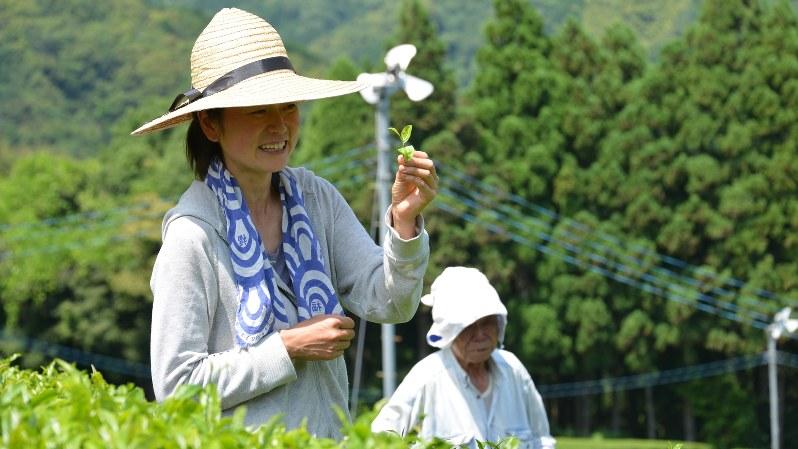 無農薬有機栽培で育った茶葉と杵塚歩さん(左)=小高朋子撮影