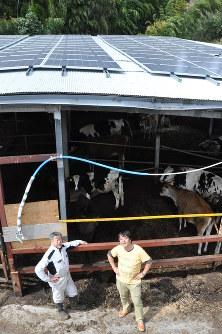 牛舎の屋根に並ぶ太陽光パネルで発電された電力が一般家庭に送られる=八王子市小比企町の磯沼ミルクファームで